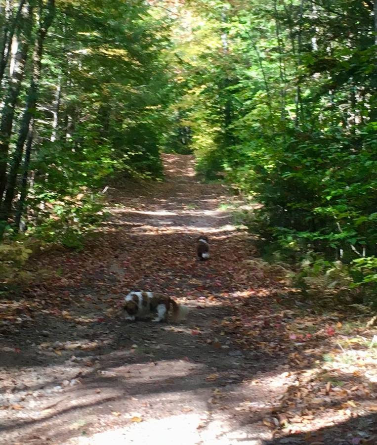 Lots of hiking, skiing, snowmobiling on the Groomed Insterstate Trail System