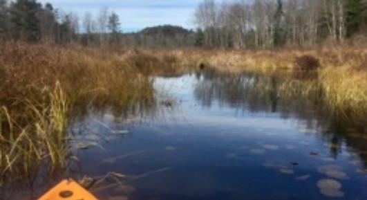 Peaceful Kayaking Pond