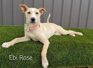 Ebi Rose