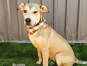 buddypfr11 (1).jpg
