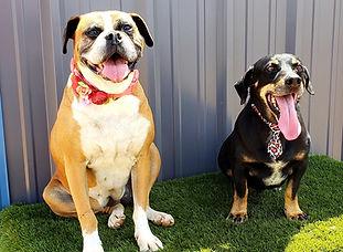 Roxy & Hugo