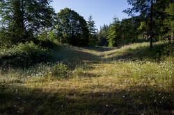 SkyMuse Meadow.jpg