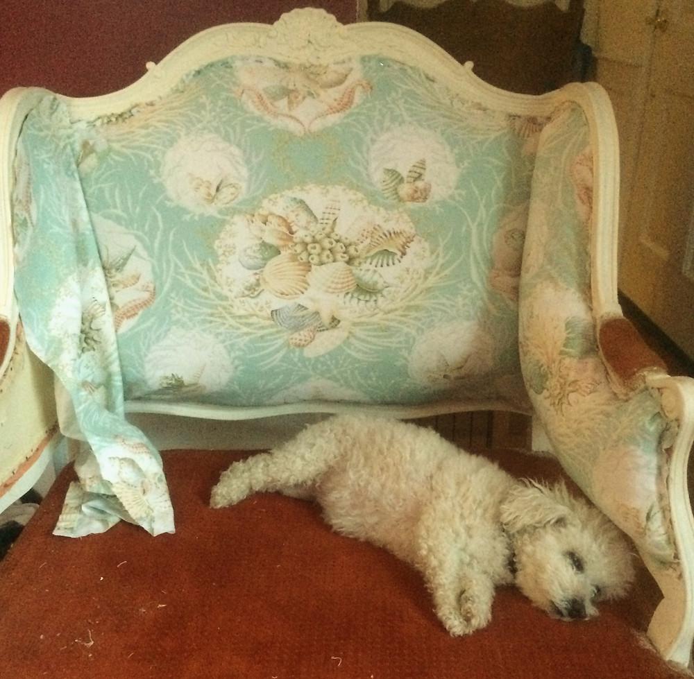 Maddy's chair.jpg