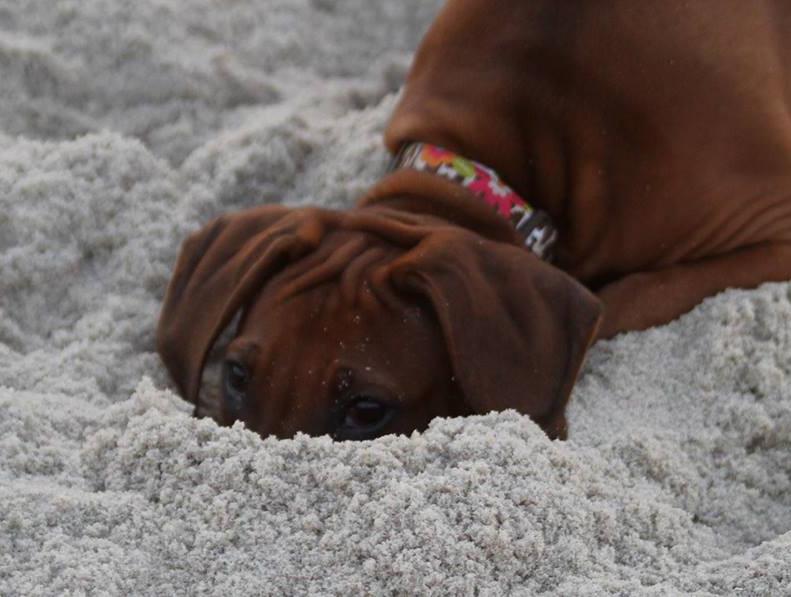 Nailah Head in Sand.jpeg