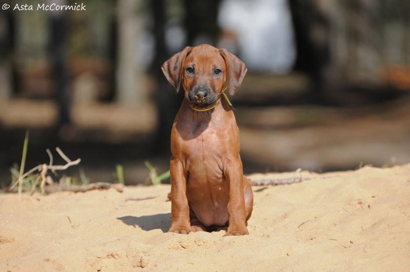 Nailah Puppy 2 .jpeg