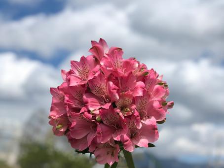 一本の花束