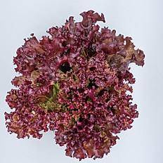 Red Coral (เรด โครอล)