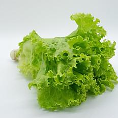 Green Lettuce (ผักกาดหอม)