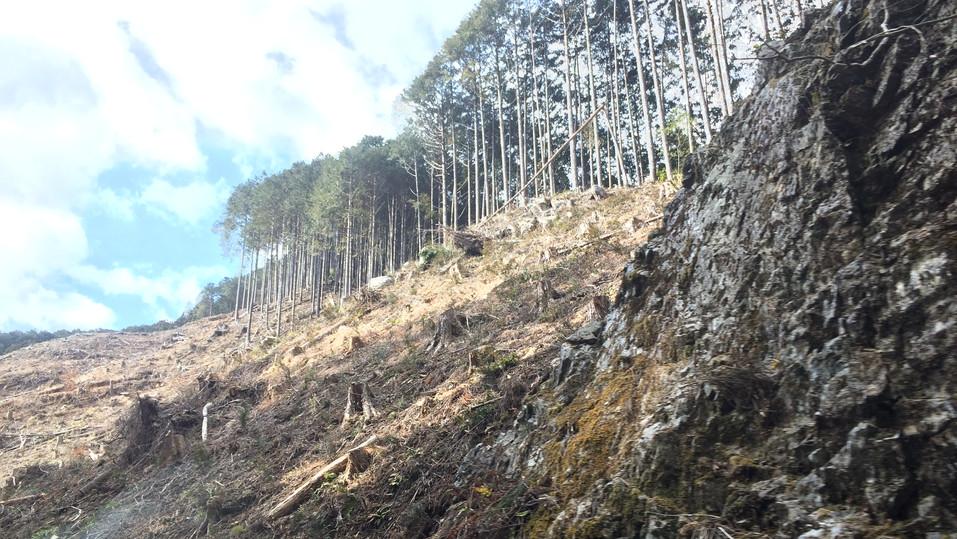 土砂の崩れた粟野の山
