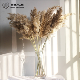 Pampas Grass for Wedding or Boho/Beachy decor.