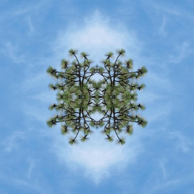 Meteoro-planta-2-copia.jpg