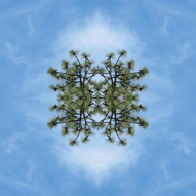 Meteoro-planta #2