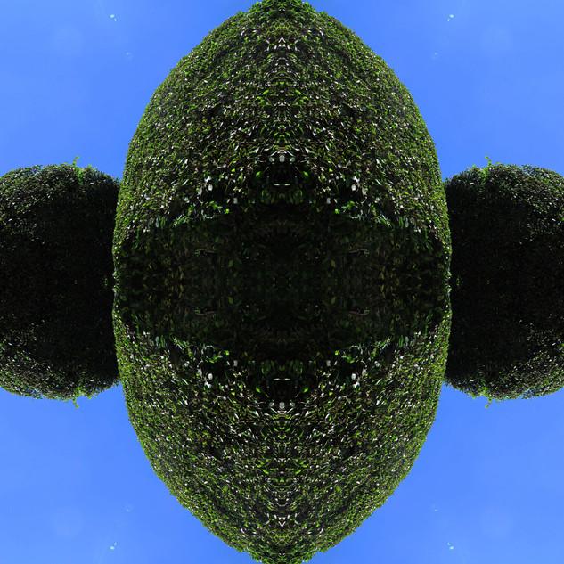 Meteoro-planta #34