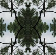 Meteoro-planta #16