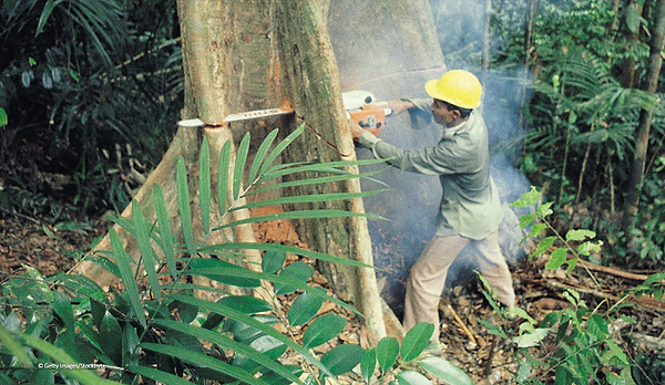 cutting down trees.PNG