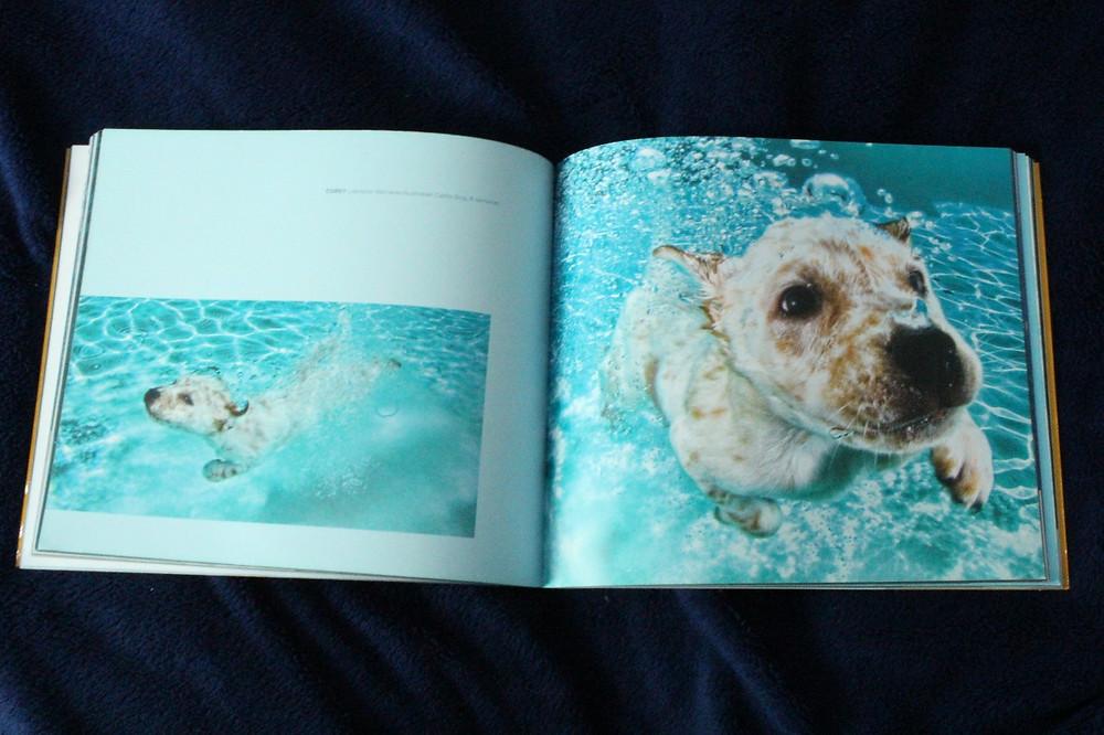 """Imagem de """"Filhotes Submarinos"""", de Seth Casteel"""
