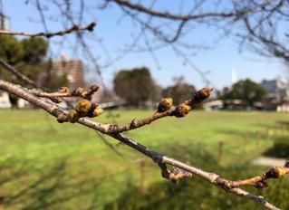 いよいよ春らしくなってきました!