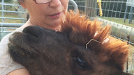 Doreen doing T-Touch w Jasper.jpg