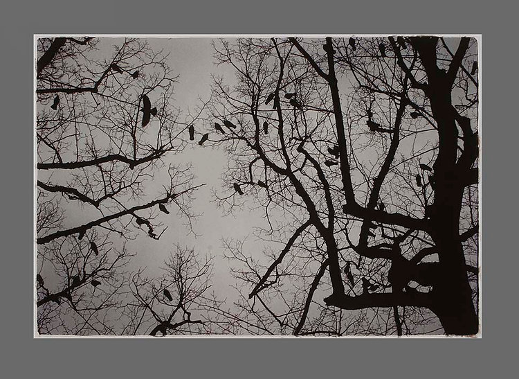 4_birds_haag.jpg