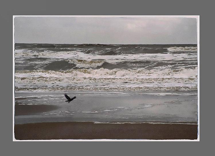 7_bird_see.jpg