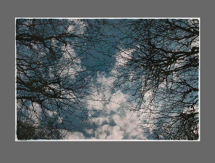 3_sky_branches.jpg