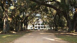 Driveway Rosedown Plantaion, Louisiana