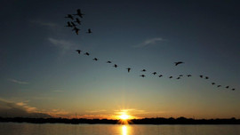 Birds Flying At Sunset, St. Augustine