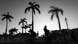 Horse & carriage silhouette, with cowboy and palm trees