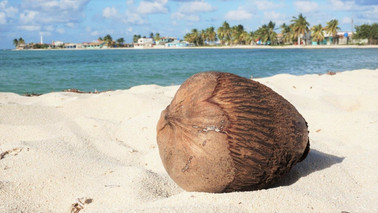 Coconut on the beach, La Boca, Cuba