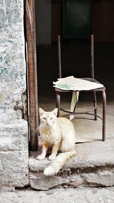 Cat by chair, Havana, Cuba