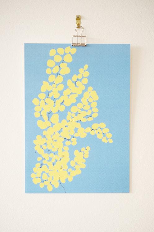 Affiche A5_Mimosa Bleu