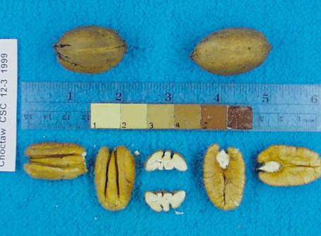 Pecan Variety Breakdown