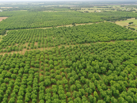 Satellite and Drone Images for Pecan Scouting