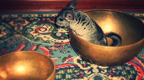 corsi campane tibetane treviso