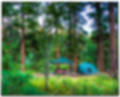 Camping-Family_Collection_Homepage.png