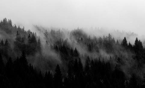 trees-2.jpg