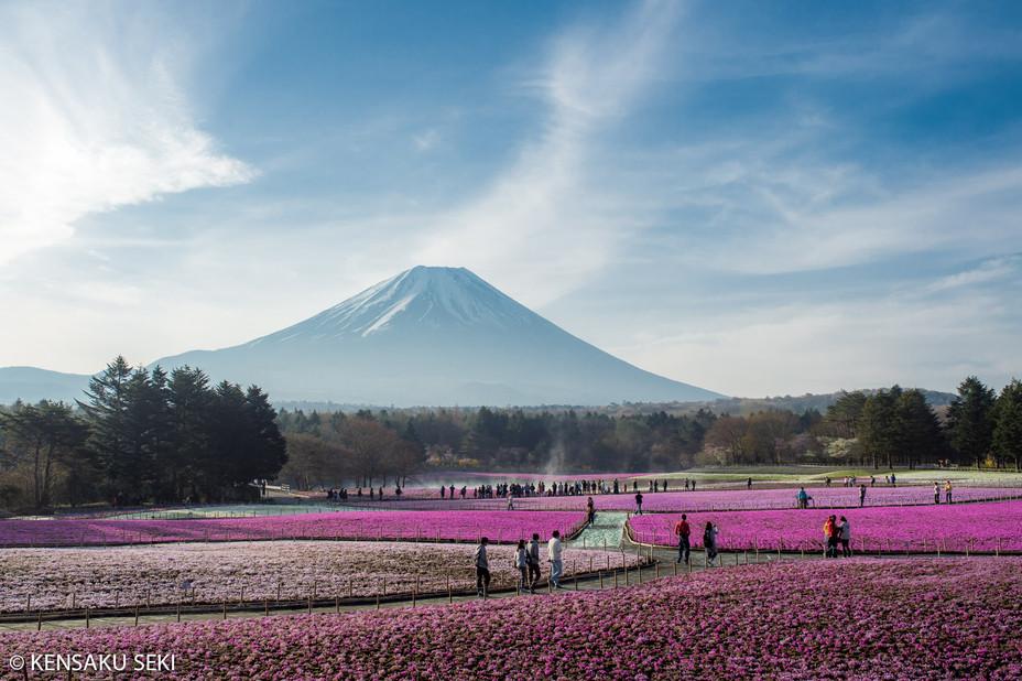 富士芝桜まつりへ