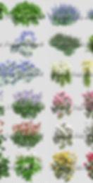 картинки растений в формате PNG на прозрачном фоне