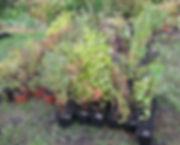 растения в контейнерах
