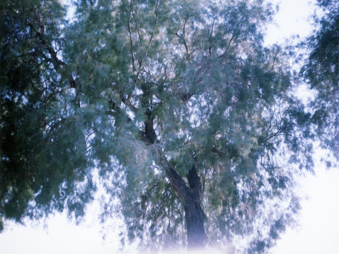 Melanos