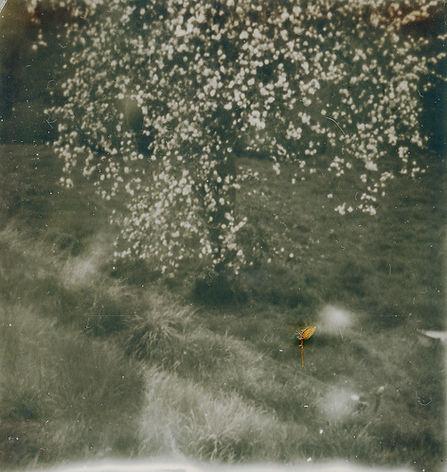 Polaroid-arbre-printemps