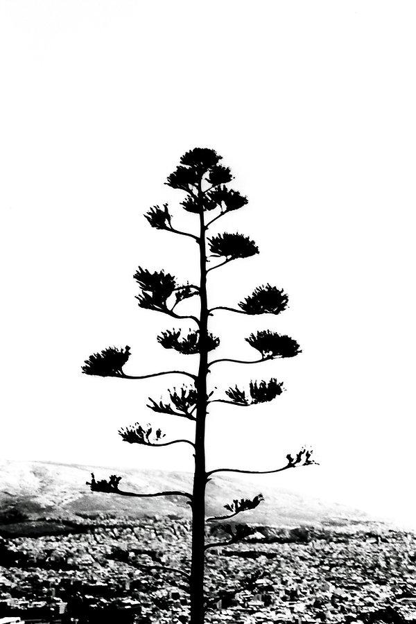 2.arbre.Plante.jpg