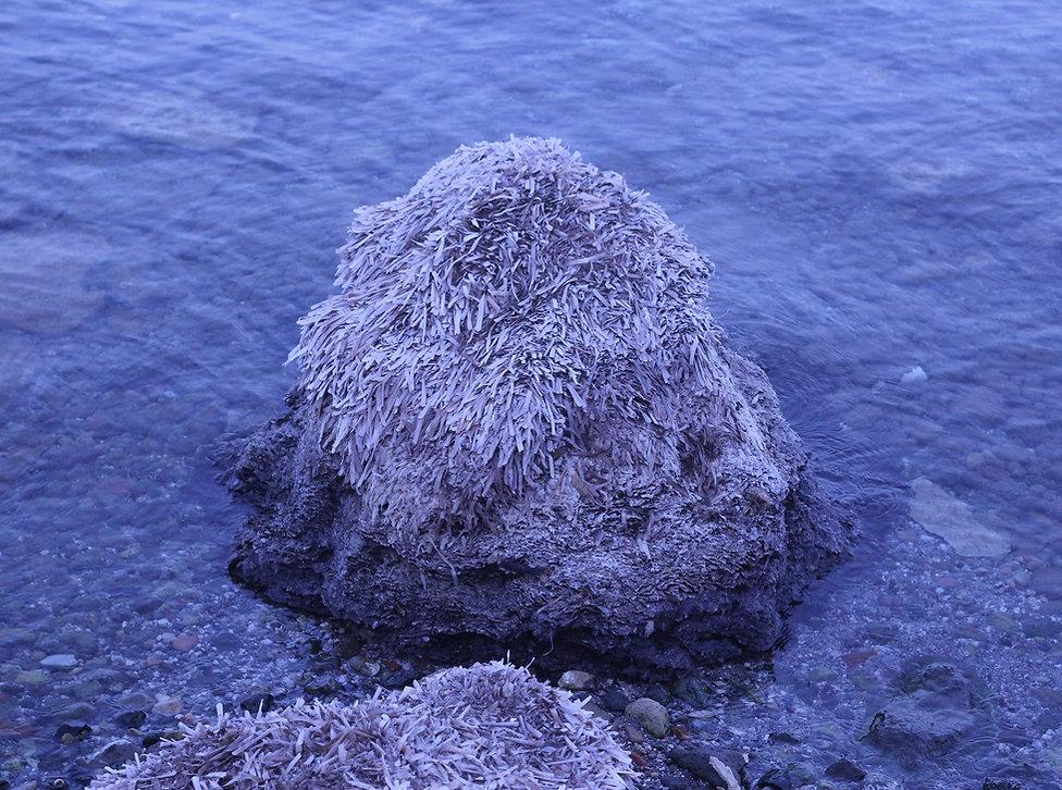 plantes mer bleu.jpg