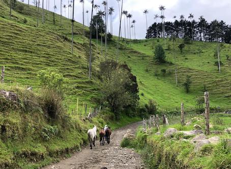 Valle de Cocora, eje cafetero Colombiano