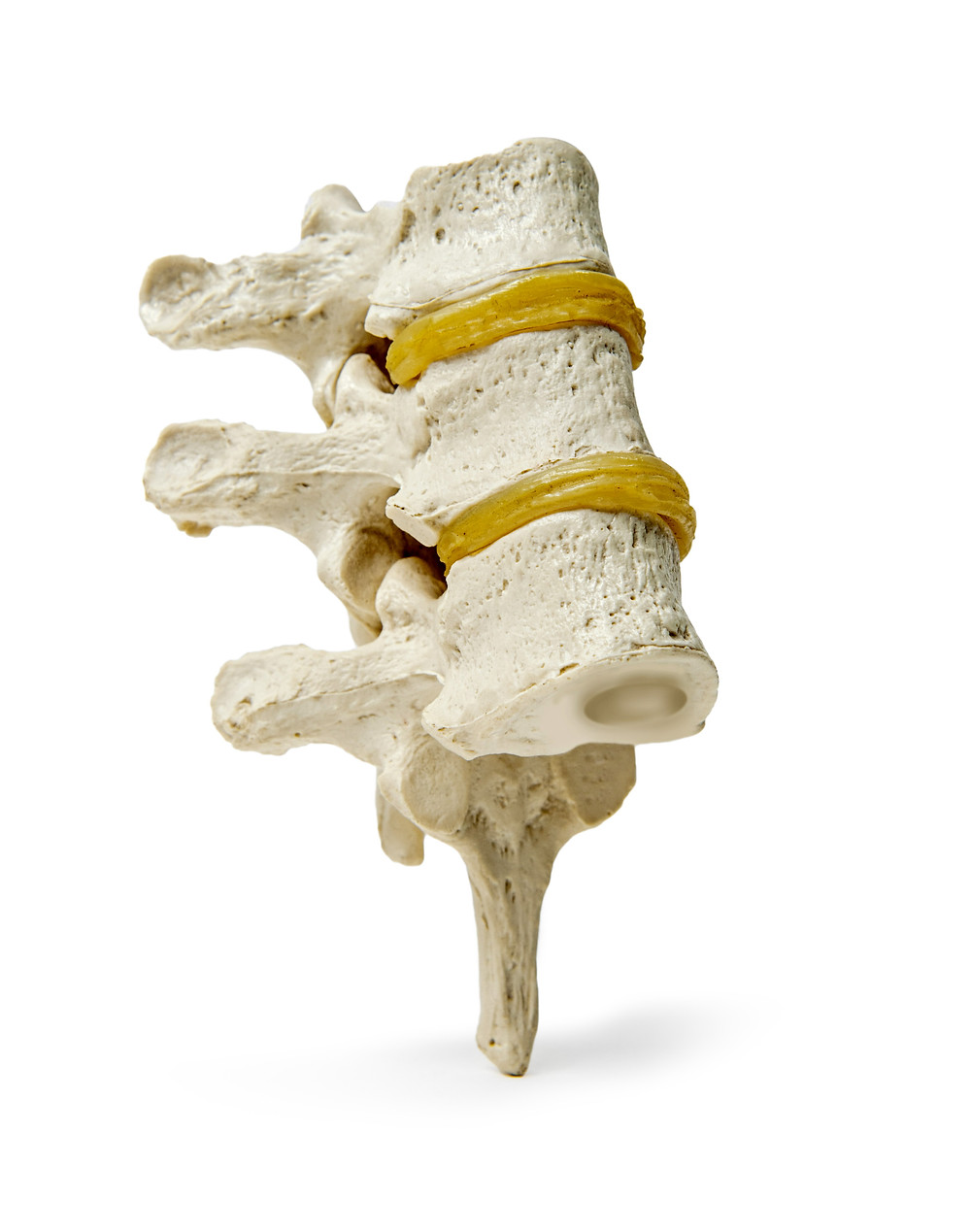 Vertebrae Spinal Movement Chiropractic Dr Nathan Jenner Prahran Windsor