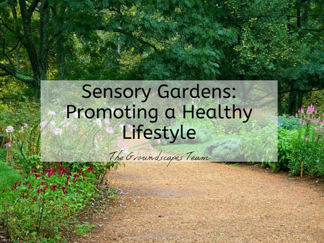 Sensory Gardens: Promoting a Healthy Lifestyle
