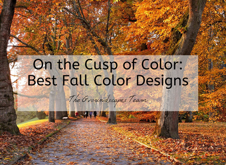On the Cusp of Color: Best Fall Color Designs