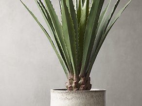 Black Thumb?? Here are some great faux plants!