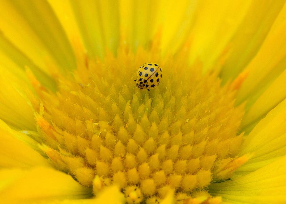 couleur-jaune-91915c32-258e-4d08-8e93-7593e80cb0e0