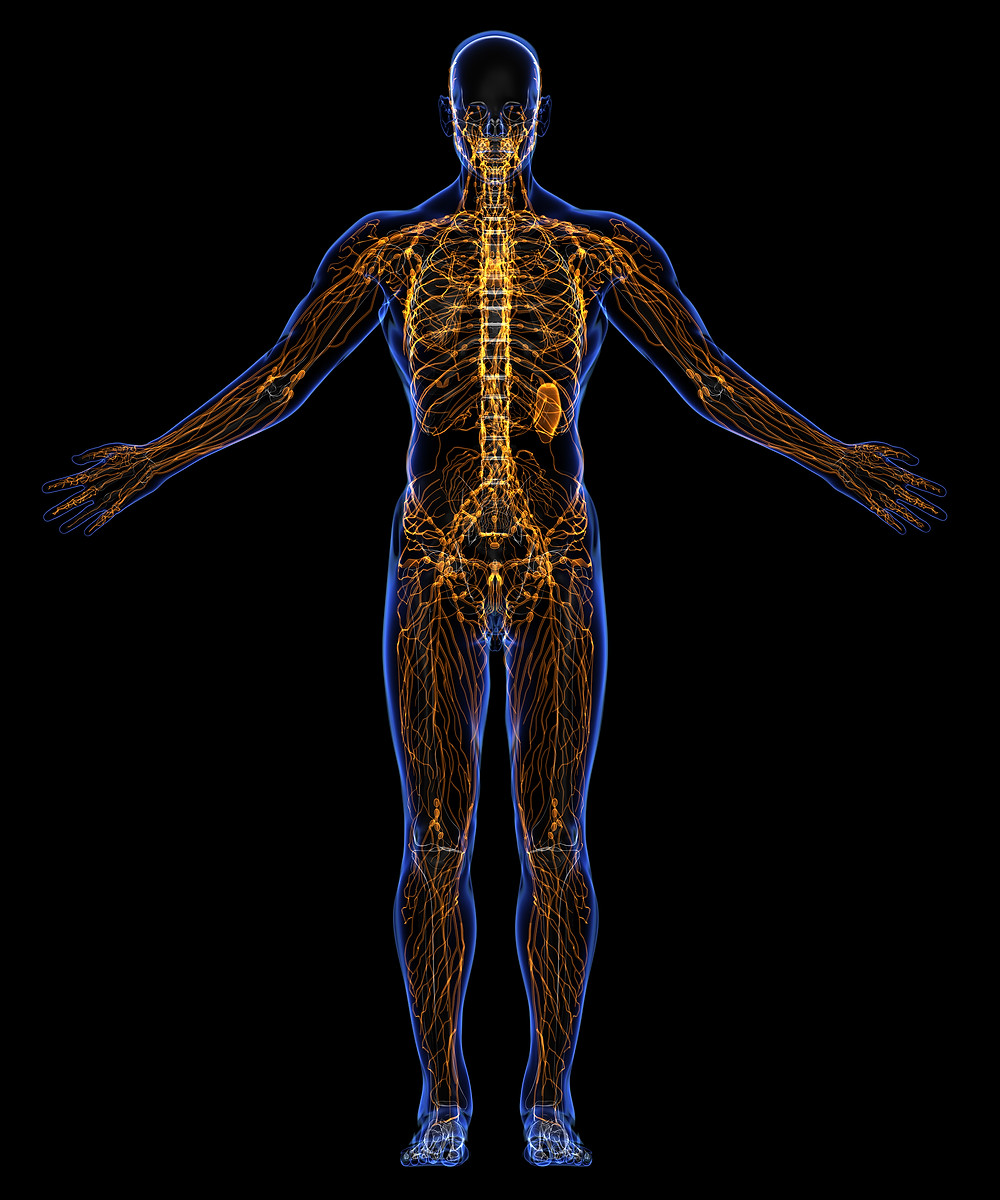 Lymphatic system (Big Stock image)